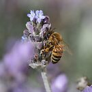 Bee January 2011 by saharabelle