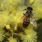 Bee June 2011 by saharabelle