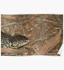 Sleepy Lizard Poster