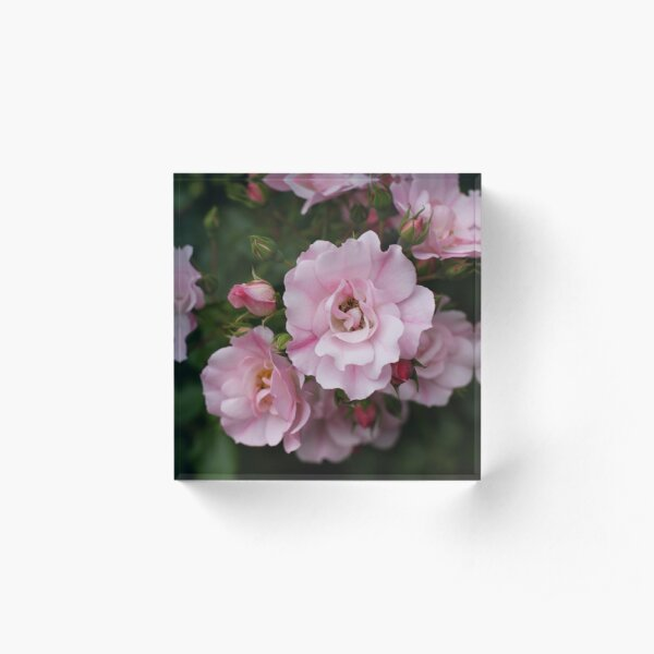 Scent of Sweet Summer Roses Acrylic Block