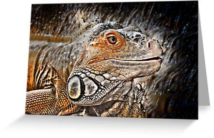 reptiles by pdsfotoart
