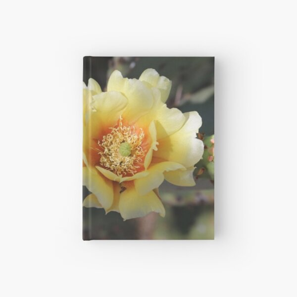 Beauty of Desert Blooms Hardcover Journal