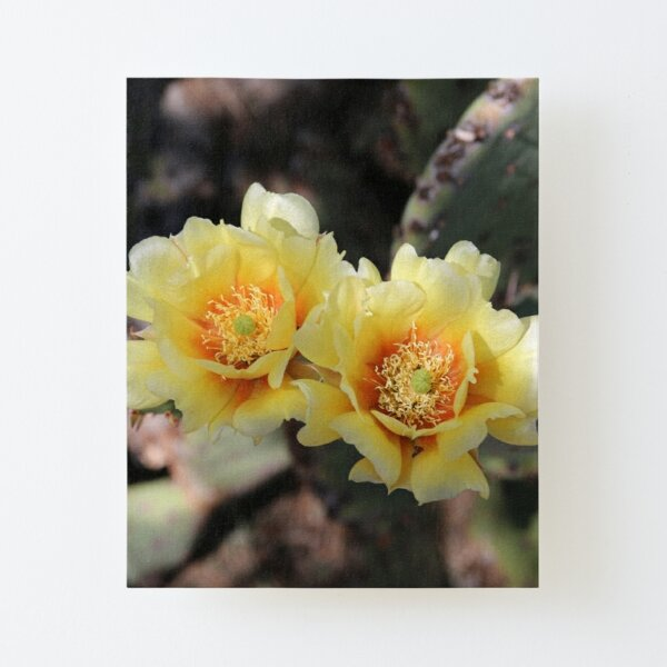 Beauty of Desert Blooms Canvas Mounted Print