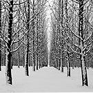 Winters point of view by Steve Biederman