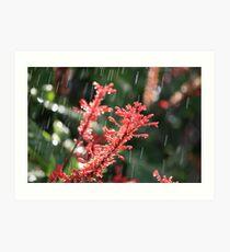 Flowers Hamilton Island Great Barrier Reef Art Print