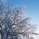 Snow sun rise by Annabelle Evelyn