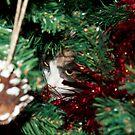 kitten in the christmas tree! by Dean Messenger