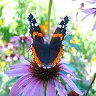 Butterfly bokeh by MarianBendeth