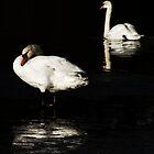 Swans by Philip Bateman