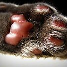 Kitty Paw by Angie O'Connor