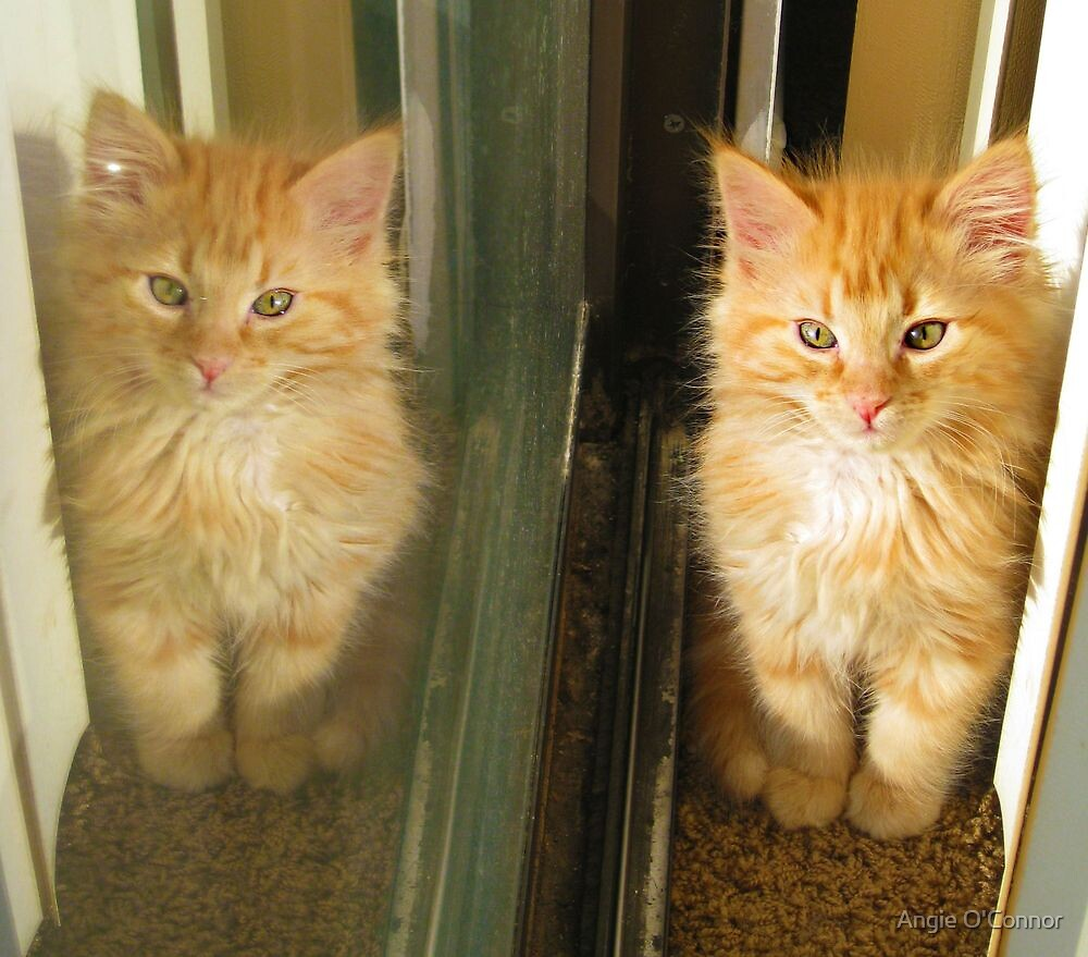 Kitty Reflection by Angie O'Connor