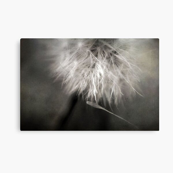 Separation of Love Canvas Print