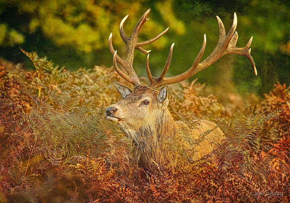 His Majesty  by Val Saxby