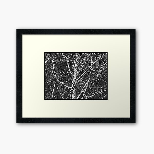 Looking Up in New Mexico Framed Art Print