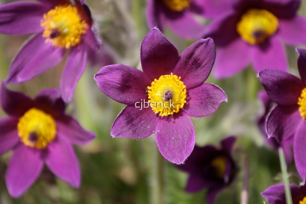 Flower in the Arboretum by cjbenck
