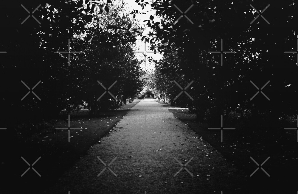 Beneath The Trees by Denise Abé
