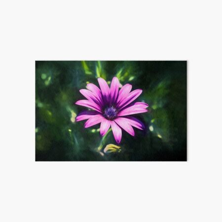 Pink Daisy  (digital painting) Art Board Print