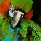 Macaw at Jungle Garden by Sheryl Unwin
