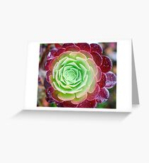 Cabbage Rose Succulent Greeting Card