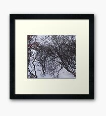 Hare's arctic lair Framed Print