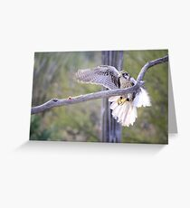 """""""My sights or on!"""" Greeting Card"""