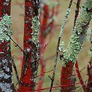Lichen on Red by Catherine Davis