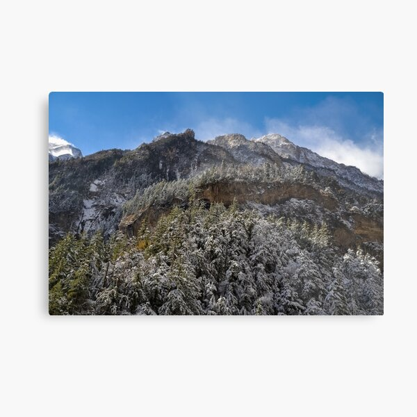 Snow covered pine forest Metal Print