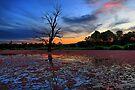 Wonga Wetlands by mspfoto