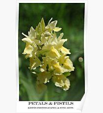petals & pistils Poster