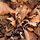 Frosted Leaves by funkybunch