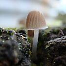 fungi by rinajoy