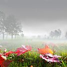 Foggy Morning by Igor Zenin