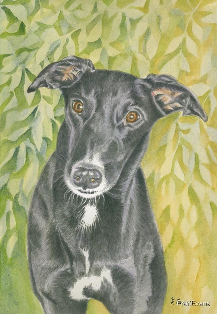 Harvey the Greyhound by FranEvans