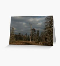 Lone Tree, Phinizy Swamp Nature Park Greeting Card
