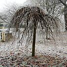 Frosty Willow Tree by Nicky  McQueen