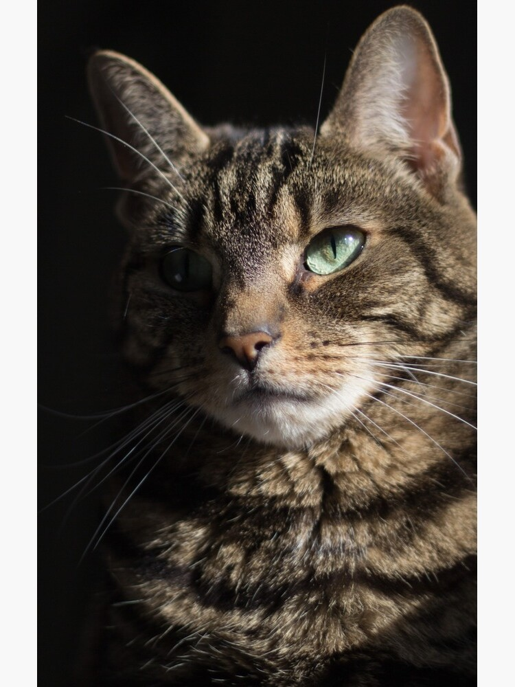 Tabby Cat Mysterious Beauty  by WiseKitty