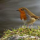 Robin 2 by Mark Lyons