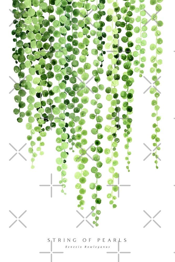Watercolor string of pearls illustration by blursbyai