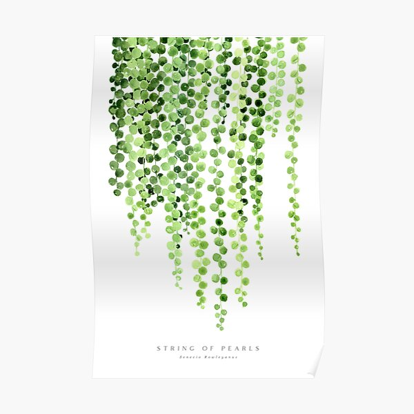 Watercolor string of pearls illustration Poster