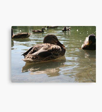 Feeding the ducks Canvas Print