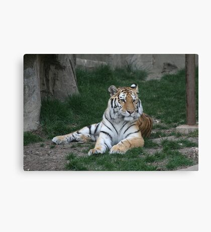 Pretty girl Canvas Print