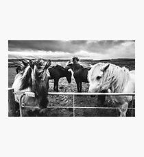 Icelandic Ponys Photographic Print