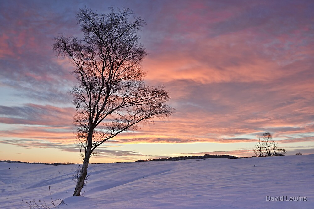 Winter Sunset - Waldridge Fell, Country Park. UK by David Lewins