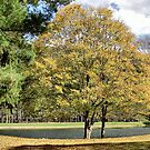 Golden Tree by Monnie Ryan