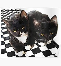 tuxedo kittens Poster