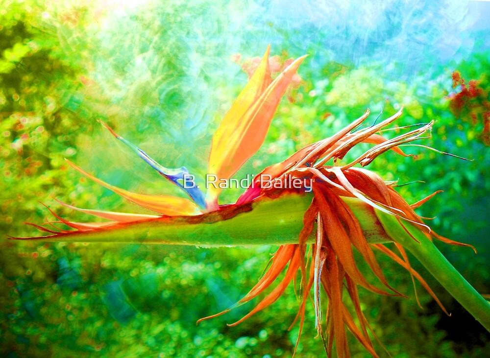 Bird of many feathers by ♥⊱ B. Randi Bailey