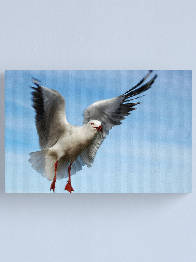 Alternate view of Seagull In Flight Canvas Print