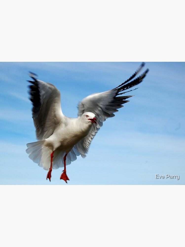 Seagull In Flight by AdamsWife