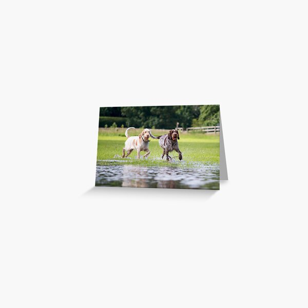 We love to paddle Spinoni Greeting Card