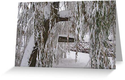 Winter Willow by John Dunbar
